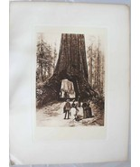 Giant Sequoia Tunnel by Henry Phleferd 1889 Lit... - $99.98