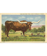 A Texas Long Horn Steer vintage Post Card  - $1.00