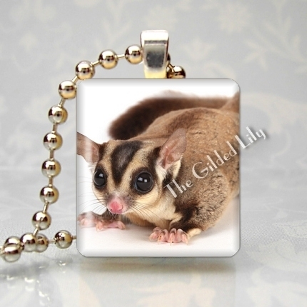 SUGAR GLIDER EXOTIC PET ANIMAL Scrabble Tile Pendant
