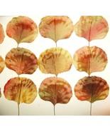 Vintage Millinery Flower FALL LEAVES Peach Yell... - $9.99