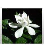 Gardenia Scented Hand & Body Cream 4oz Tube - $7.50