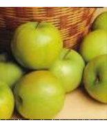 Green Apple Scented Hand & Body Cream 4oz Tube - $7.50