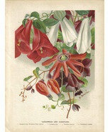 Botanical_print_lapagerias_and_passiflora_thumbtall