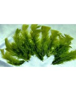 Feathers Bright Sage Green Natural Dyed 6in lot... - $4.50