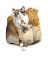 2 Fluffy Cats     Cat  Tshirt    Sizes/Colors - $11.83 - $15.79