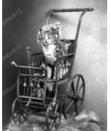 Cat Sitting In Victorian Brass Carriage 8x10 Re... - $19.99