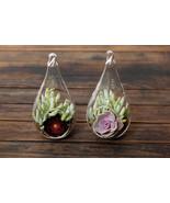 Succulent Terrarium Duo: Echeveria, Aeonium Pur... - $28.99