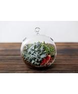 Succulent Terrarium Large Globe: Echeveria Tops... - £17.16 GBP