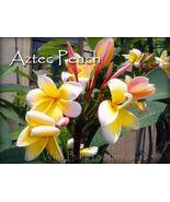 Strong Peach Perfume *Aztec Peach* Plumeria Fra... - $14.95