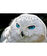 MAGICK OWL SPIRIT Spell bring me the power, the... - $507.00