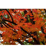 Beauty Fine Art Photograph 24 X 30 Museum Paper... - $150.00