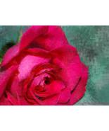 Velvet Rose SALE Fine Art Photograph 24 X 30 Mu... - $150.00