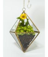 Hanging Copper Diamond Glass Terrarium for Succ... - $29.90