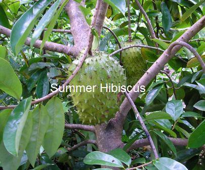 Soursop3