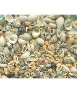 Sea Shell Craft Tiny Shells Lot 3 - $16.99