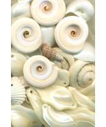 Sea Shell Pendant Mix - $16.99