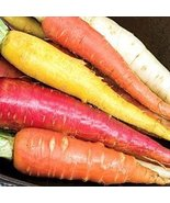 MIXED CARROT SEEDS - 100 FRESH SEEDS - $1.49