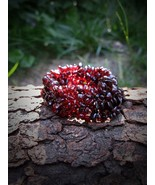 Vampire Beauty Bracelet Blood-red Garnets Haunt... - $39.99