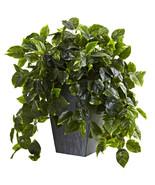 Hanging Green Pothos w/Slate Planter UV Resista... - $149.93