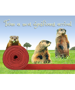 Funny Groundhog Birthday Card: Red Carpet Welco... - $4.25