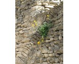 Buy Photographs - Stone Wall, Gordes, Provence, France   Original, Signed and