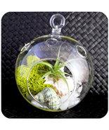 Tillandsia Air Plant Hanging Glass Terrarium - ... - $30.00