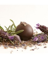 Chocolate_lavender_thumbtall