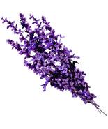 Lavender_thumbtall