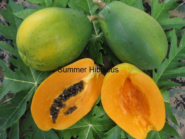 TROPICAL SOLO PAPAYA WAIMANALO Low-Bearing FRUIT TREE 50 SEEDS