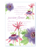 Fresh Scents Scented Sachets by Willowbrook Company - Passion Flower, 3 Pack