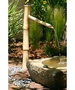 Bamboo 36