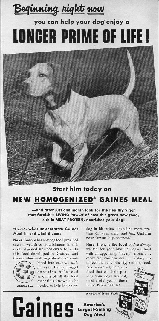 1954 Vintage Ad Gaines Meal Dog Food Hunting Dog Pointing