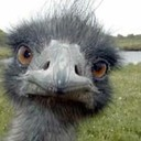 Emu-small_thumb128