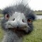 Emu-small_thumb48