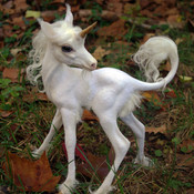 Heres-a-baby-unicorn-22010-1301022341-3_thumb175