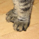 Paws_thumb128
