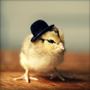 Square_chicks_in_hats_june_2_8b_thumb128