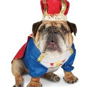 Zelda_canine_king_pet_costume_thumb175
