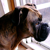 Lilly_out_window_thumb175