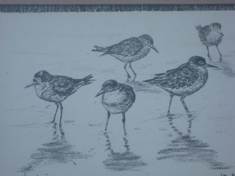 JO KO JOE KOCH OUTER BANKS ARTIST SANDPIPERS PRINT PIC