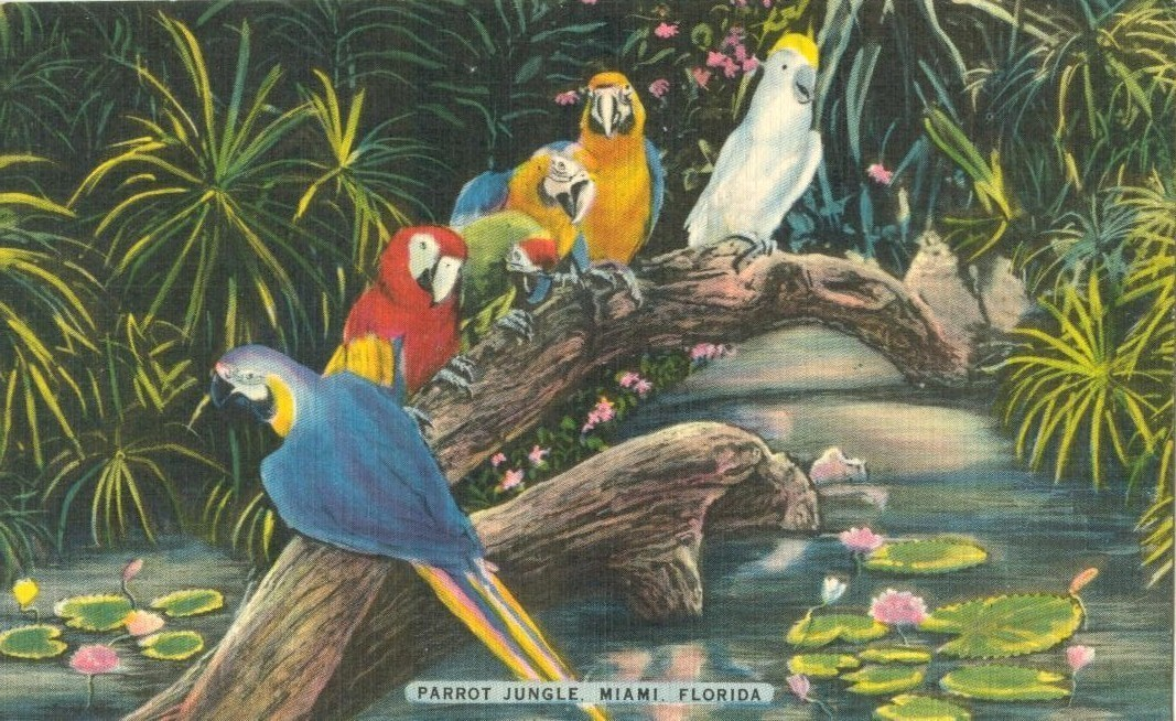 Parrot jungle discount coupons