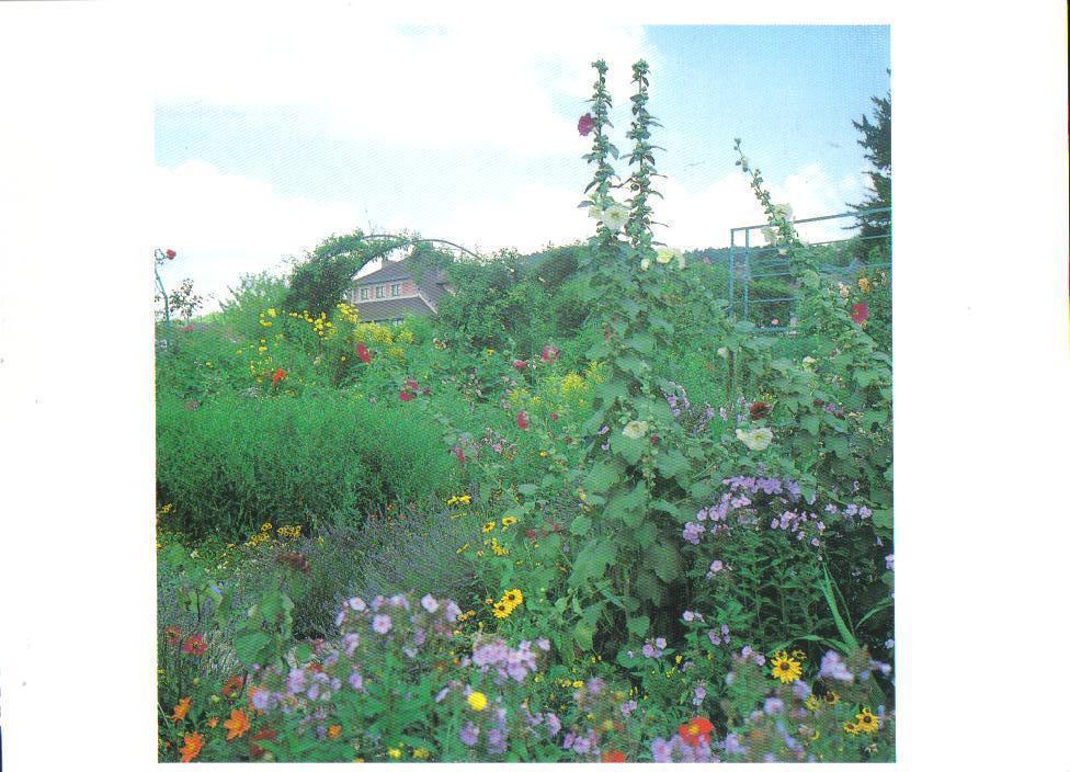 Monet's Gardens Series Hollyhocks and Phlox Postcard