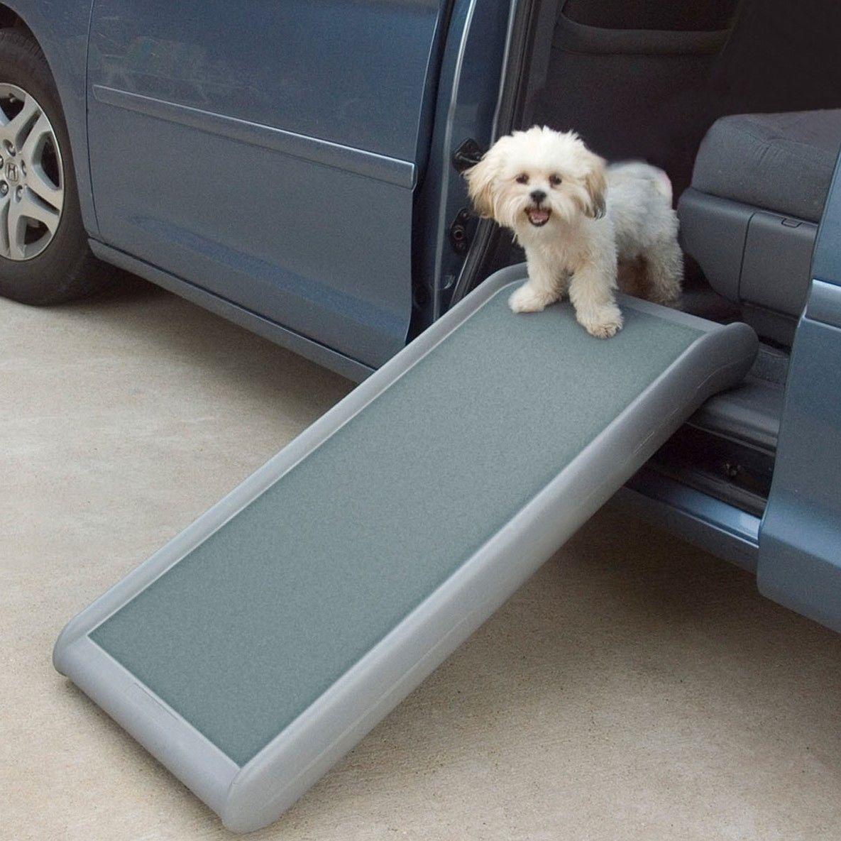 Dog Cat Stairs Trust