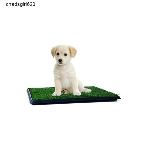 How To Transition Dog From Puppy Pad To Outside