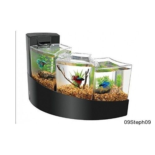 Betta fish tanks nz globe aquarium the globe aquarium for Labyrinth fish tank