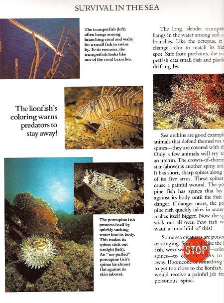 Image 3 of Discover Ocean Life by Alice Jablonsky Hb 2008 Children Science
