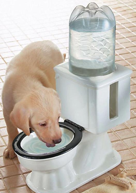 Refilling Dog Toilet Water Bowl