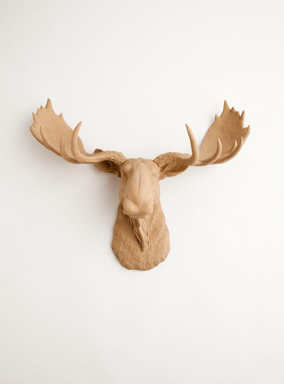 the agatha tan resin moose head white faux taxidermy moose head wall decor wall sculptures. Black Bedroom Furniture Sets. Home Design Ideas