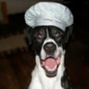 Dogpic_thumb175