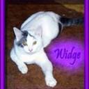 Widge-border_thumb128